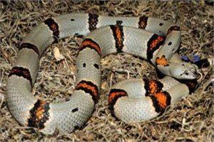 Други змии