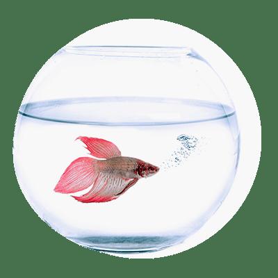 Продукти за риби